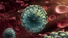 पछिल्लो २४ घण्टामा २० देखि २९ वर्षका संक्रमित सबैभन्दा धेरै थपिए