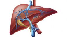 भाइरल हेपाटाइटिसः कारण, लक्षण र सर्ने तरिका